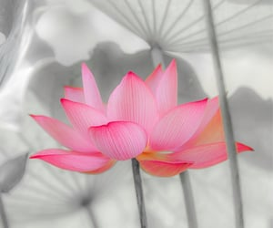 Lotus in summer by Yasuo Hirano