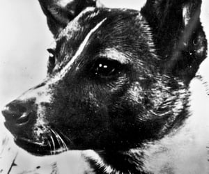 50s, eyes, and puppy image