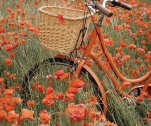 bicycle, flowers, and theme image
