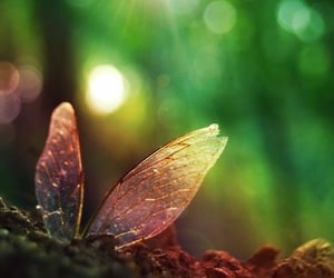 butterfly, nature, and wings image