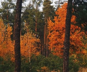 осень, лес, and красиво image