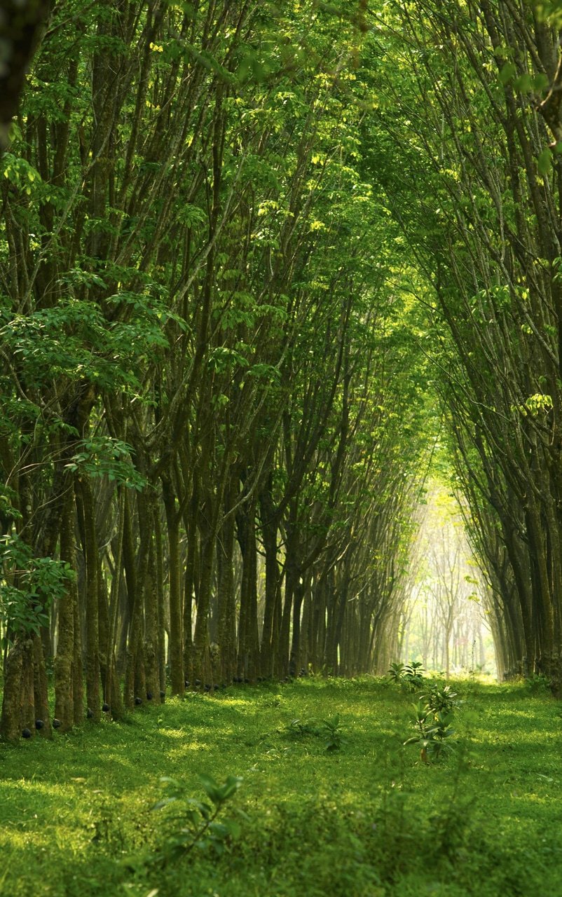 article, green, and nature image