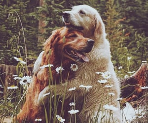 dogs, animals, and friendship image