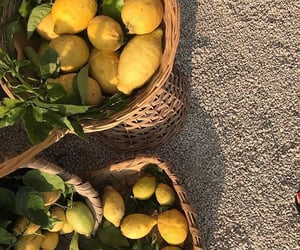 lemon, fruit, and aesthetic image