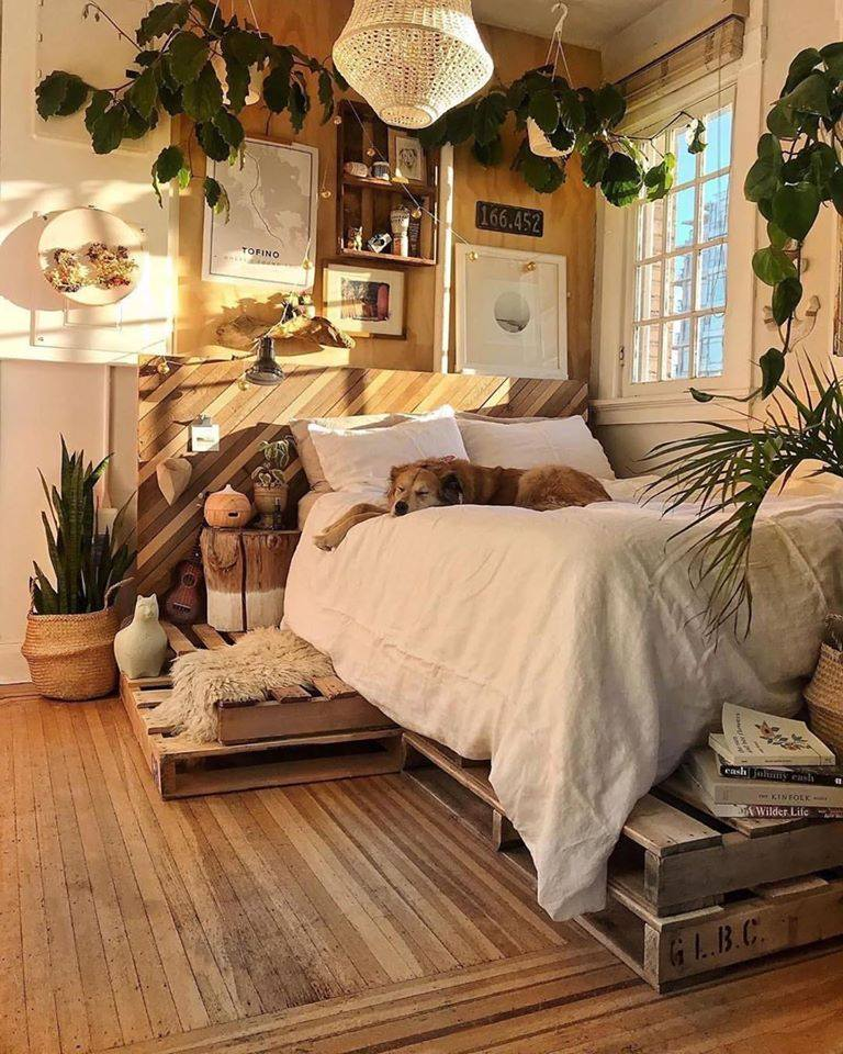 dog, room, and bedroom image