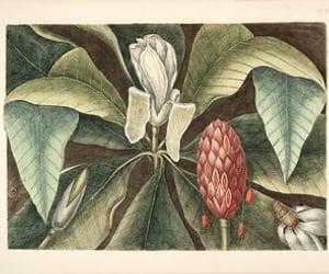 bahamas, North Carolina, and botany image