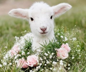 animal, flowers, and nature image