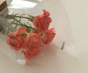 flores, flowers, and rose image
