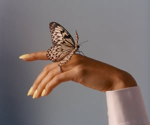 aesthetics, butterfly, and nice image