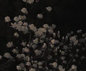 цвеће теехее