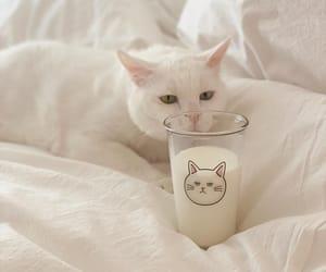cat, milk, and soft image