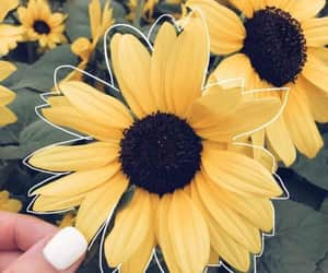 nature, flower, and yellow image