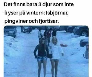 kul, fjortisar, and vintern image