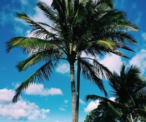 exotic, palm, and tropical image