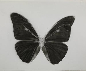 butterfly, archive, and black image