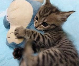 baby animal, kitty, and kitten image