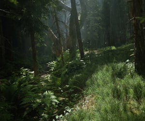 ferns, journey, and last of us image