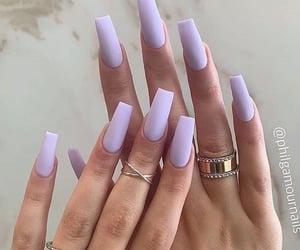 Lavender 🌾🌾🌾