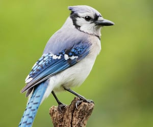 animal, feathers, and nature image