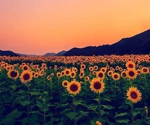 Yellow 💛💚