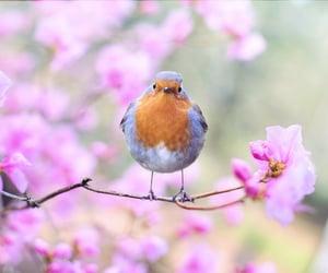 bird, photography, and birds image
