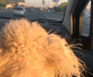 carretera, dog, and perro image