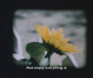 quotes, empty, and flowers image