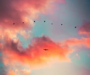 airplane, pink, and birds image