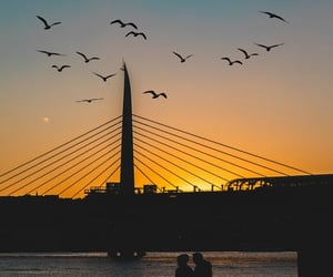 birds, city, and photography image