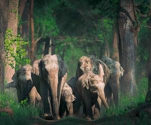 elefante, elephant, and foto image