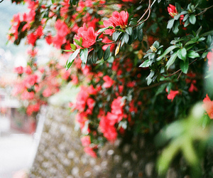 flowers, red, and beautiful image