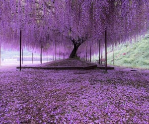 tree, purple, and nature image