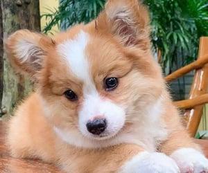 background, dog, and pet image