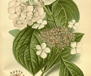 19th century, plants, ornamental, and chromolithography image