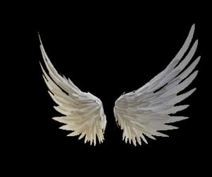 angel, wings, and transparent gif image