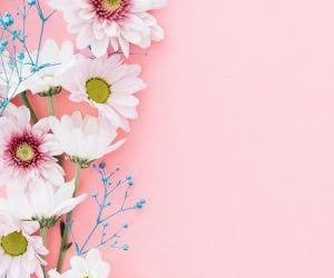flowers, pink, and wallper image