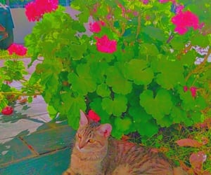 cat, flowers, and indie image