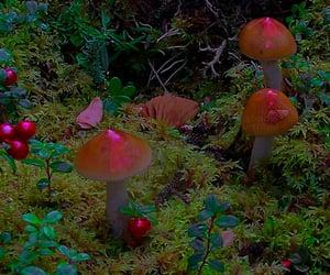 mushroom, nature, and garden image