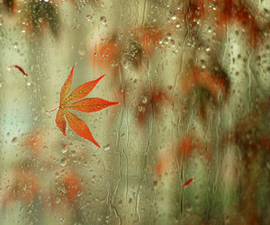 rain, leaves, and autumn image