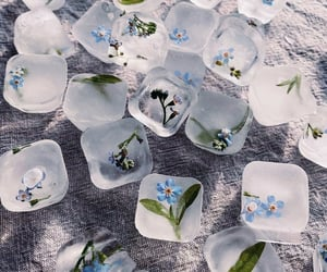 flowers, ice, and aesthetic image