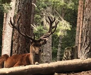 Animales, fauna, and naturaleza image