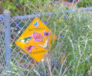 butterflies, butterfly, and surreal image