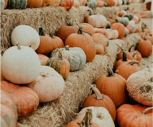 article, autumn, and tag image