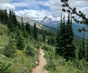 british columbia, forest, and mountains image