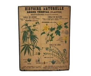 etsy, curiosity cabinet, and botanical print image