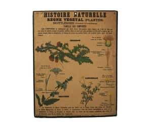 natural history, antique flower, and antique french image
