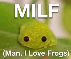 frogs, meme, and green image