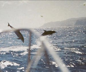 dolphins, ocean, and vintage image