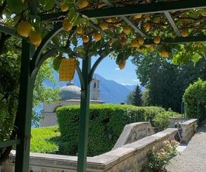 green, lemons, and summer image