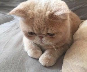 amazing, blog, and cat image